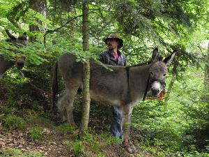 Eselwanderung und Wildkräuterführung