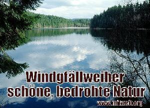 Windgfällweiher: Schöne bedrohte Natur im Schwarzwald